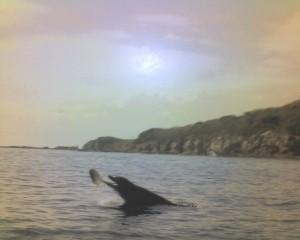 Delfin jugando con pez frente a la Isla del medio